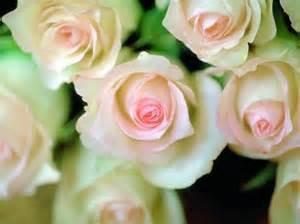 rosaas vida